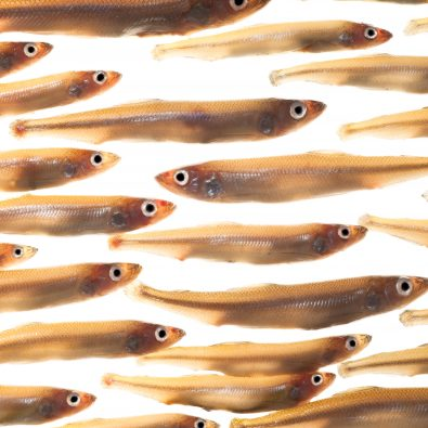 Vis zwemt tegen stroom in