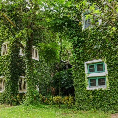 Huis begroeid met groen